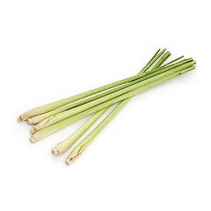 Lemongrass as insect repellent thesis